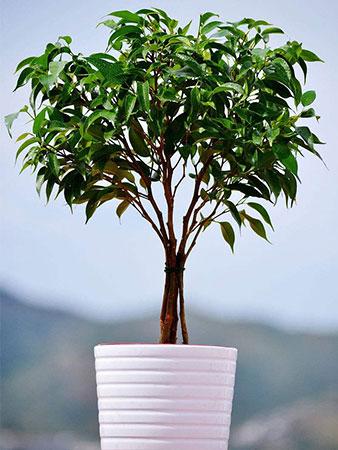 骨灰植物盆栽