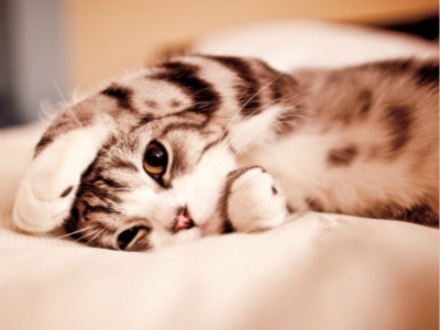 猫咪便秘怎么办?