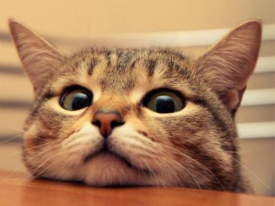 重庆猫猫必威体育手机版登录