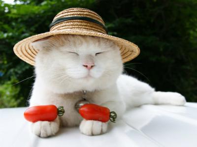 重庆火化猫猫的地方